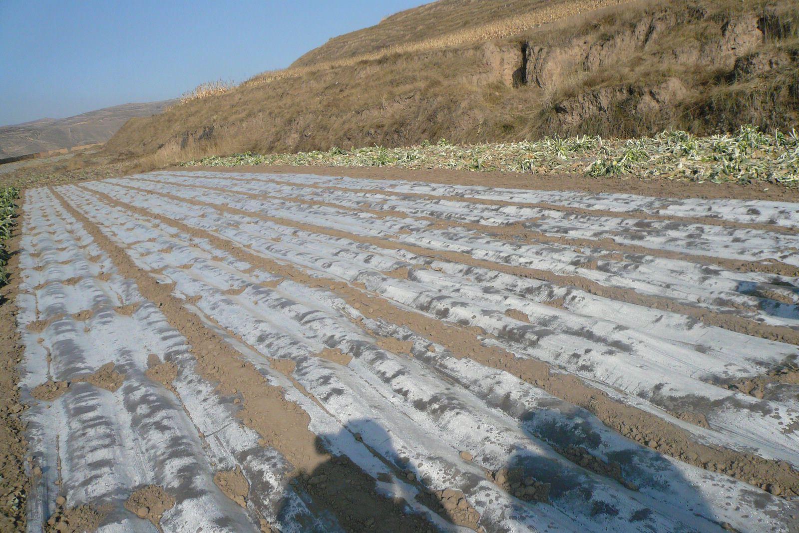 新疆:地膜回收率突破60%